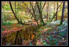 "Ruisseau en fort ""2015"" (Christian Labeaune) Tags: france automne paysages fort 2015 sousbois ruisseau bourgognectedor chatillonsurseine21400 tangsdesmarots christianlabeaune"
