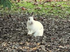 eh? (PhoToRCh) Tags: pet pets white macro rabbit animals duck colori animali cucciolo uccello coniglio papera anatre viaggiare
