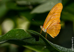 Mainau Island Butterfly (juneknight56) Tags: mainau germany bodensee lakekonstanz lakeconstance constance