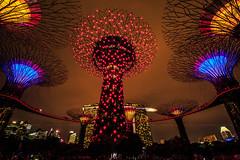 ~ Supertrees - Gardens by the Bay... (bw.futures) Tags: art bwfutures neonfoto dsl canon eos vietnam neon foto landscape naturelandscape sky ef f4l is usm outdoor serene canonef1635mmf4lisusm 1635mm singapore singapura  alkaffbridge gardensbythebay alkaff bridge supertrees