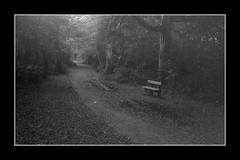 Wonder [Olympus Trip 35] (Mr B's Photography) Tags: tehidy tehidycountrypark path bench blackandwhite woods forest paranol olympustrip35 fomapan