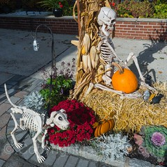 Happy Halloween, Edgewater, New Jersey (jag9889) Tags: sculpture jag9889 usa bergencounty pumpkin halloween newjersey outdoor 2016 display edgewater 20161024 07020 gardenstate nj skulptur unitedstates unitedstatesofamerica zip07020 us