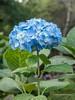 Clyne Gardens 2016 09 30 #2 (Gareth Lovering Photography 3,000,594 views.) Tags: clyne gardens botanical swansea wales flowers trees shrubs park olympus stylus1s garethloveringphotography