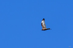 jocou-8675 (verolauro) Tags: alpesdehauteprovence brume diois drome fuji jocou provence vaucluse vautours vercors veroniquelaurolillo