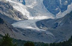 Val Morteratsch (CH) (Giorsch) Tags:  schweiz svizzera swizz switzerland kantongraubnden cantonedeigrigioni graubnden grisons oberengadin altaengadina pontresina gletscher alpen alpi alps torrente berge montagne mountain ghiacciaia morteratschglaero gebirgsbach wildbach glatscherdalmorterasch persgletscher talgletscher gletscherlehrpfad wanderweg bernina rhtischebahn treninorosso schnee pizbernina pizzupo bellavista pizargent crestaagzza geologie outdoor berg landschaft abhang hgel grat grasland bergkamm feld morteratschbach morteratschglacier mountainhiking morteratsch morteratschtal morteratschgletscher ovadamorteratsch mountainbiking vadretdamorteratsch gletscherzunge glacierterminus terminedelghiacciaio frontglaciaire frenteglaciar geologia