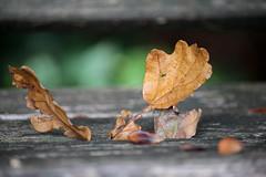 Autumn Feelings (Rolf-Schweizer) Tags: herbst autumn artphotography art appenzell artist appenzellerland auffrischen appenzellertourismus animalphotography fotografie flickr farben flower frost thechurchofjesuschristoflatterdaysaints toggenburg keystone kunst kirchejesuchristiderheiligenderletztentage naturephotography nature natur neckertal morning morgenstimmung bauernverband bauer olma gettyimage schweiz svp switzerland stgallertagblatt swiss suisse svizzera sky silence schweizerischerbauernverband