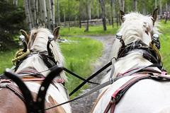Horse carriage (jc.mendo) Tags: jcmendo canon 550d 55250 caballos horses coche carriage rancho banff canada