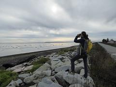 Birding at Boundary Bay (misiekmintus) Tags: vancouver bc britishcolumbia canada birds birding bird birdwatching pacificnorthwest nature natur naturaleza northwest boundarybay delta