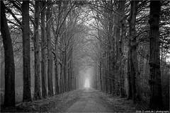 __ (l--o-o--kin thru) Tags: allee ally bume trees nederland bw sw