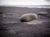 Black Sand and Rock (TheSimonBarrett) Tags: iceland lýðveldið ísland beach vik