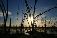 There's an island where all things are silent (alideniese) Tags: wintonwetlands winton victoria australia landscape waterscape trees silhouette light shadow sun sunset sunshine sundown sunflare bright reflection water swamp nature outdoors sky
