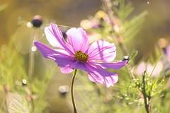 Yearning for Light (Claudia G. Kukulka) Tags: flower blume sun sonne light licht sunlight sonnenlicht
