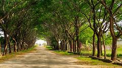 Basundhara (Arifin Billah Photography) Tags: dhaka nature tree road landscape arifin arifinbillah bangladesh