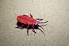 Task 10: Damian Malicki. Lily Beetle (kastudio) Tags: ioio ioio2016 2016 art paper origami olympiad damian malicki lily beetle