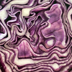 Mysterious...cabbage! (Valentina Conte) Tags: mysterious macromondays macro cabbage purple lines vegetable food healthy good salad valentinaconte rebelsl1 canon100d