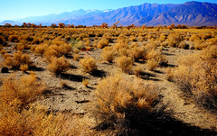 LOOKING SOUTH ACROSS OWENS VALLEY (Gary Post) Tags: looking south across owens valley