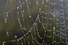 Collana di perle (francesca_siccardi new profile) Tags: italia italy veneto nikon3200 nikon drops gocce earlymorning wetmorning spider spiderweb cobweb ragnatela rugiada morning wet umido