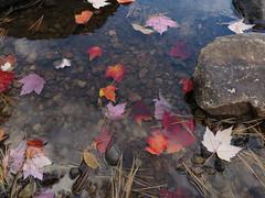 (Espykrelle) Tags: river rivière eau water leaves feuilles fall automne couleur nature canon outside