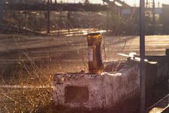 night will be cold again (glasseyes view) Tags: glasseyesview cold wintersun winterlight wintermorning winternight thegloriouslightofmorningsun goodmorning beer bottle empty