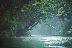 Deep jungle (Chris Herzog) Tags: jungle malaysia travel river green nature forest trees wilderness