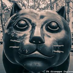 botero's cat (Giuseppe Inglese) Tags: rosso giuseppeinglese canoneos70d gatto cat botero barcellona art arte boteroscat tamron1750mmf28diii ritratto portait