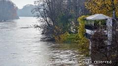 Torino (16) (cattazen.com) Tags: alluvione torino po esondazione parcodelvalentino murazzi pienadelpo cittàditorino turin piemonte