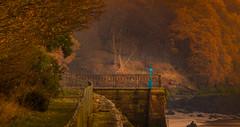 The Crossings (Rob Pitt) Tags: easrtham ferry autumn jobs leaves golden orange owl telescope jetty wirral merseyside mersey woods railings sigma 70300mm 300mm morning sunrise