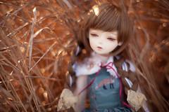 green fox #3 (koroa) Tags: bluefairy bf tf bjd doll feeriedollatelier feeriedoll 50mm zeiss msd