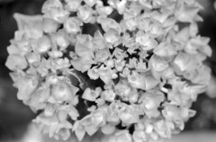 Abstraccin-5 (oscam.cl) Tags: minolta maxxum 7000 af 3570mm fuji neopan across rodinal parodinal casero film filmphotography bw