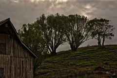 Every Barn Wants To Be A Tree Again (KnightedAirs) Tags: d5200 nikon nikkor hdr high dynamic range 60mm afs oregon coast coastal tree farm land landscape barn rural