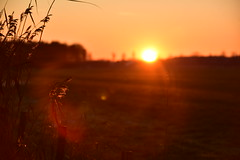 the last embrace (Pics4life.nl) Tags: sunset sunlight sunflare grass winter embrace love red december bright