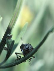 46 (Roberto Gramignoli) Tags: insetti