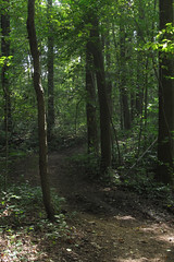 forest path (Molly Des Jardin) Tags: park trees usa brown sun green leaves forest state pennsylvania earth path sunny dirt trunks 2014 undergrowth susquehannock drumore 43215mm