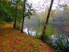 See vom Hotel (Sophia-Fatima) Tags: autumn lake deutschland see herbst essel niedersachsen wellnesshotel hotelheideköpke ihrverwöhnhotel inruheanspruchsvollgeniessen