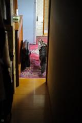 20150814-DS7_1224.jpg (d3_plus) Tags: sky cats animal japan cat 50mm nikon bokeh daily 日本 nikkor 猫 kanagawa dailyphoto 動物 50mmf14 thesedays 神奈川 日常 50mmf14d nikkor50mmf14 ボケ ニコン afnikkor50mmf14 d700 nikond700 aiafnikkor50mmf14 nikonaiafnikkor50mmf14
