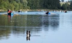 12027087_752736321521625_8533477062382353410_o (Amble CRC) Tags: rowing skiff amble coastalrowing staylesskiff stayles amblecrc