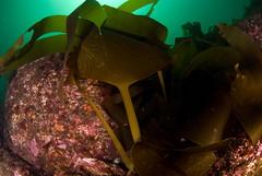 EUO  OCEANA Carlos Surez 30927 (Oceana in Europe) Tags: spain lira esp oceana lacorua marineprotectedareas atlnticocantbrico2008 atlanticcantabrian2008 reasmarinasprotegidas