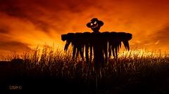 No crows allowed! (darklogan1) Tags: madrid longexposure nightphotography halloween corn scarecrow creepy logan aranjuez darklogan1