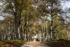 DSC_7582 (adrizufe) Tags: landscape nikon paisaje otoo basquecountry abadio urkiola beautifulearth udazkena nikonstunninggallery aplusphoto d7000 adrizufe adrianzubia
