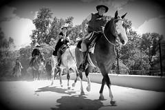 Tradicin (Eduardo Amorim) Tags: horses horse southamerica argentina criollo caballo cheval caballos cavalos pferde cavalli cavallo cavalo gauchos pferd chevaux gaucho cavall  amricadosul gacho amriquedusud provinciadebuenosaires  gachos  sudamrica sanantoniodeareco suramrica amricadelsur areco sdamerika crioulo caballoscriollos criollos  americadelsud crioulos cavalocrioulo americameridionale caballocriollo eduardoamorim cavaloscrioulos
