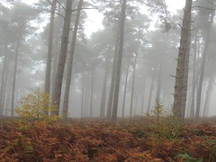 Photo of Misty trees, Sandy, Bedfordshire