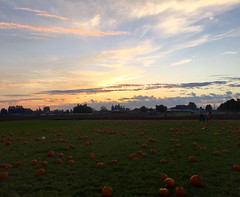 Pumpkin. (emilypallack) Tags: sunset pumpkins 2015