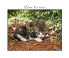 close to you (allfr3d) Tags: pet cats cute animal animals cat garden chats nikon kitten katten kat feline chat belgium belgique sweet belgië gatos gato felines neko katze gatto poezen cutecat vlaanderen goetsenhoven vlaamsbrabant greatphotographers kissablekat allfr3d