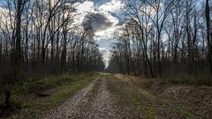 Slavonski put