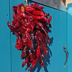 My neighborhood with iPhone: ristra (Spanish: string).  New Mexico autumn! (cbrozek21) Tags: chile autumn newmexico fall pepper gate chili decoration ristra bluegate redchile newmexicotradition newmexicofall