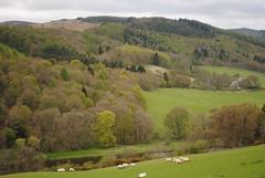 Ettrick Tweed (robbierunciman) Tags: trees england colour beauty forest woodland landscape scotland spring scenery border foliage shade borders tweed leafing ettrick b7060