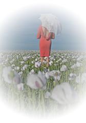 Countrylife... (Harleynik Rides Again.) Tags: flowers woman sexy parasol backless backshot poppyfield facelessportrait harleynikridesagain