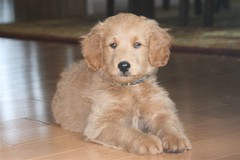 this-is-toby---hes-one-of-morgan-and-chewys-little-boys-_3814127673_o