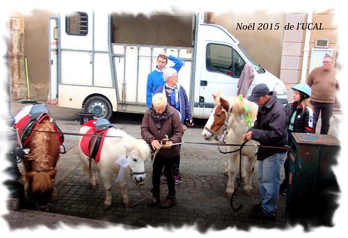 Manège & poneys (13)