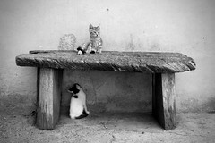 I'm the king (-Aldievel-) Tags: italy summer blackandwhite italia cat countryside monochrome animali campagna cats molise biancoenero estate gatti gatto bestie beasts panca
